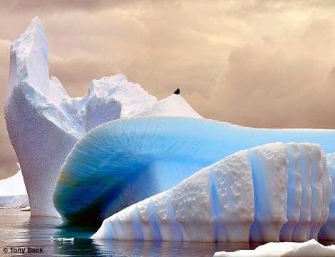Antarctic Ice with south Polar Skua