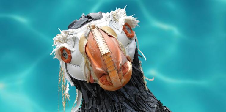 penguin face - washed ashore