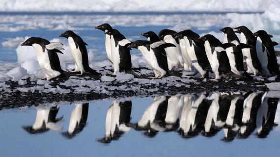 penguins-ross-sea