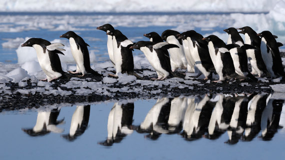 penguins-ross-sea