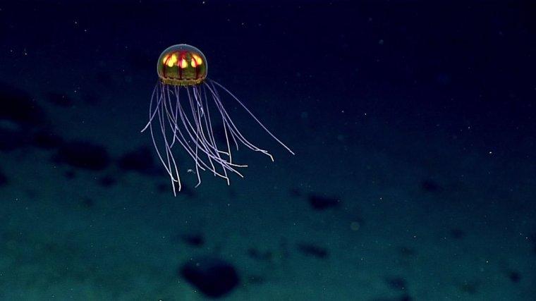 new_jellyfish-jpg__1072x0_q85_upscale