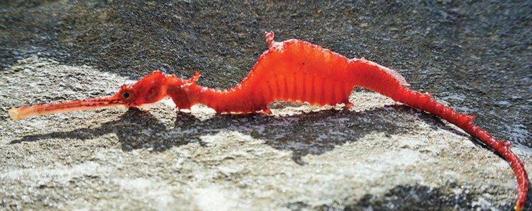 ruby-seadragon